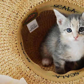 Cat in the Hat by Nancy Lowrie - Animals - Cats Kittens ( kitten, cat, animal, , baby, young )