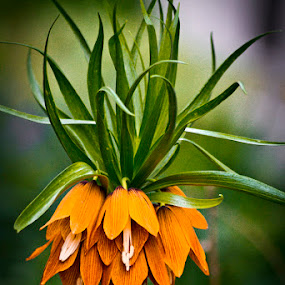 by Melissa S. Hunt - Nature Up Close Flowers - 2011-2013 ( plant, orange, nature, flower, shapes )