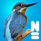 Vogels van Europa icon