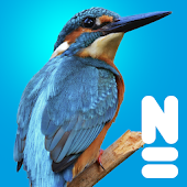 Vogels Van Europa Android APK Download Free By Naturalis Biodiversity Center