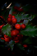 Photo: Have a Holly, Jolly...  Look, not everyday is going to generate high art and inspiration during a #365Project. Just the same G+ friends, have a great holiday season.