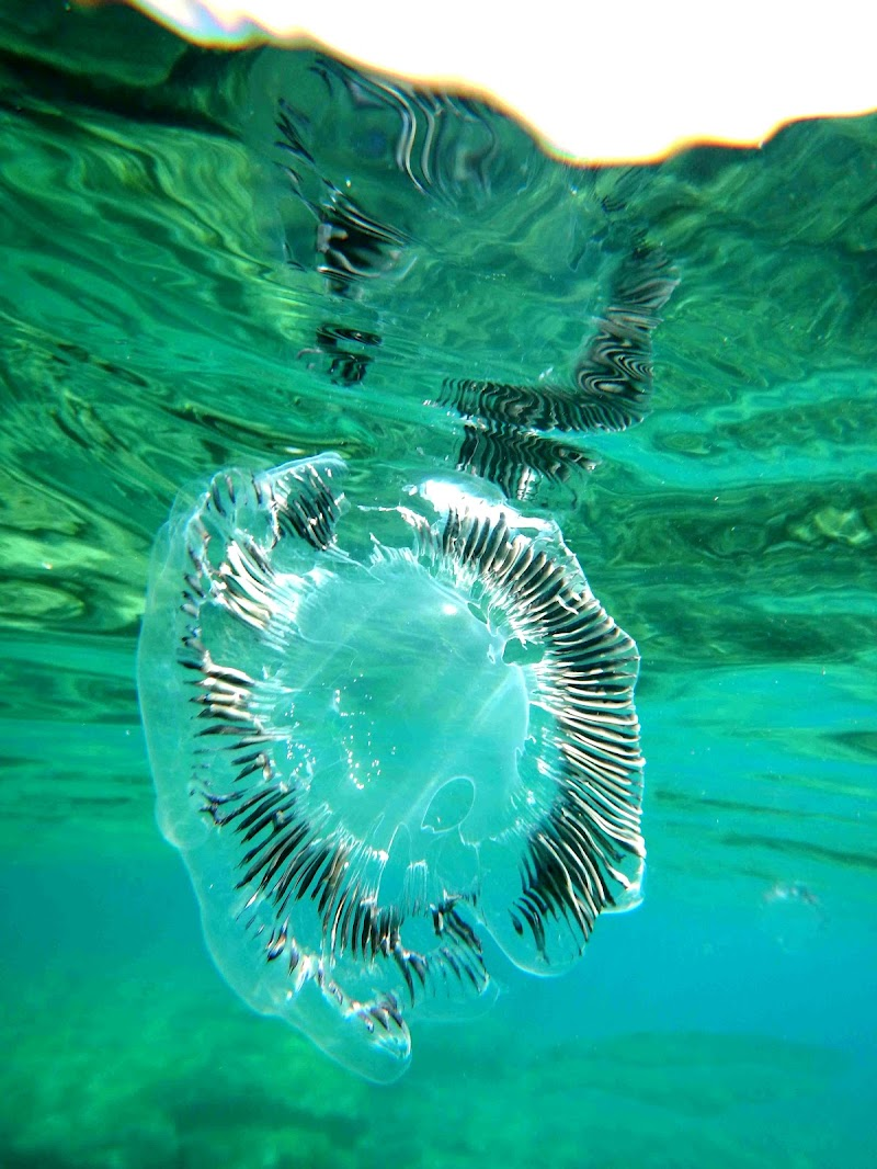 medusa di tomaso melis