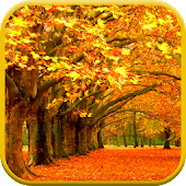 Autumn Leaves Video Wallpaper