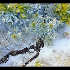 by Olivier Grau - Landscapes Weather ( drone, creek, snow, trees, aerial,  )
