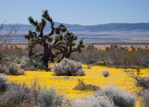 Photo: Mojave Desert, California, Spring 2011