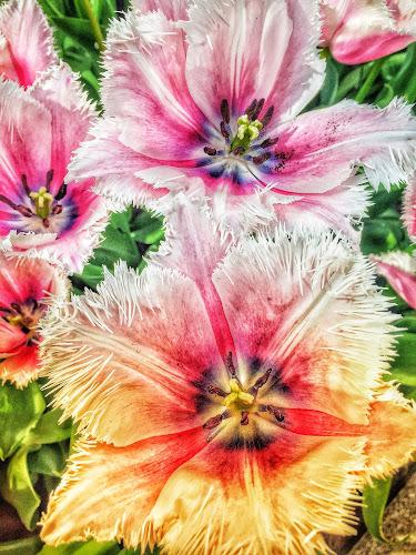 Flower Power by Baks Berbl - Flowers Flower Buds (  )