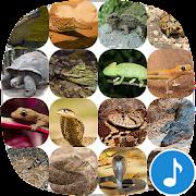Appp.io - Reptile Sounds