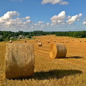 Hay rolls I by Ciprian Apetrei - Instagram & Mobile iPhone ( mobile photos, lanscape, hay, summer, brittany )
