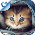 Kitty Cat Breeds Quiz HD icon