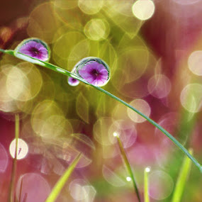 dew this morning  by Angga Putra - Nature Up Close Flowers - 2011-2013 ( dew, flower )