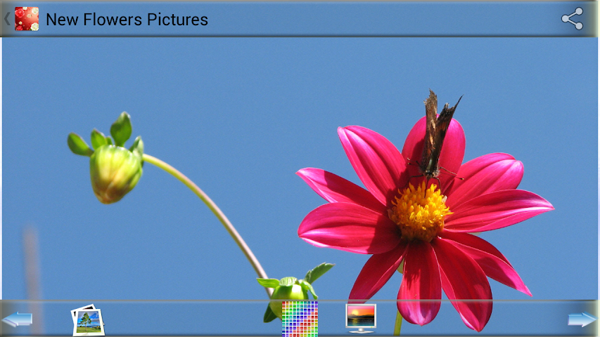 android New Flowers Pictures Screenshot 4