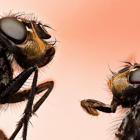 Father and Son by AhMet özKan - Animals Insects & Spiders