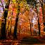 by Steven Burki - Landscapes Forests (  )
