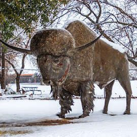 Bison Bull Metal Sculpture by Kathy Suttles - Buildings & Architecture Statues & Monuments (  )
