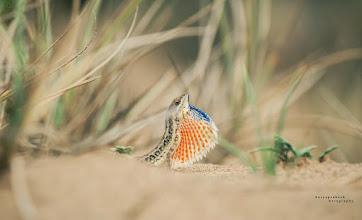 Photo: surya prakash
