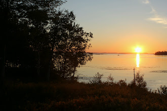 Photo: Sunrise and Birch Trees, Pigeon Cove