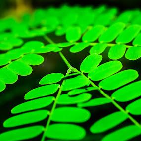 Leaf by Nugroho Kristanto - Nature Up Close Leaves & Grasses ( surakarta, daun, solo, nugroho, kristanto, leaf )