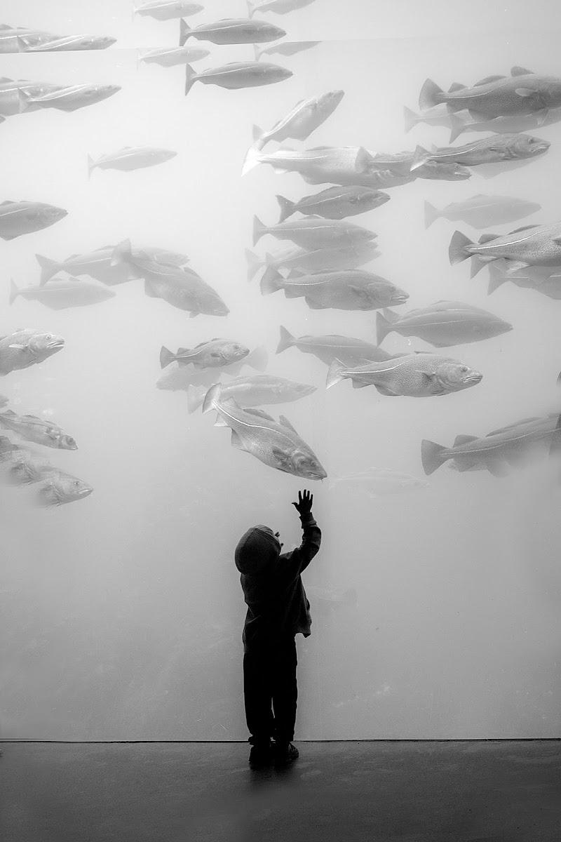 sotto il segno dei pesci .... di faranfaluca