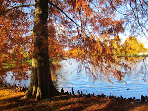 Photo: Orange trees and roots at the edge of a lake at Eastwood Park in Dayton, Ohio.