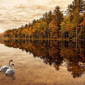 Swan Lake by Pat Eisenberger - Landscapes Waterscapes ( michigan, reflection, autumn, munising, fall, swan, lake, sunrise,  )
