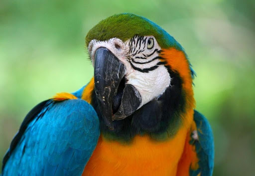 Colorful Parrots Wallpapers
