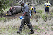 Members of a forensics team perform an autopsy on a rhino killed for its horn in the Kruger National Park.
