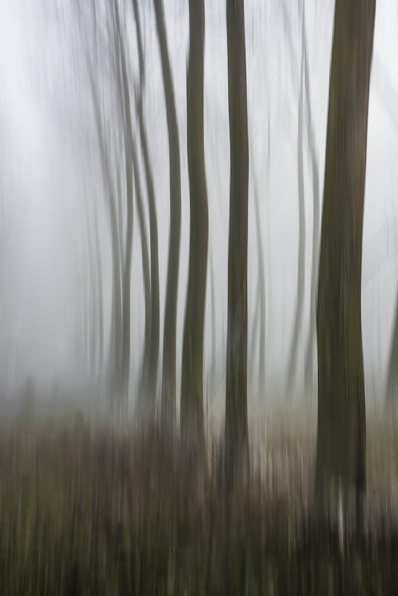 Foggy forest di jandmpianezzo@bluewin.ch