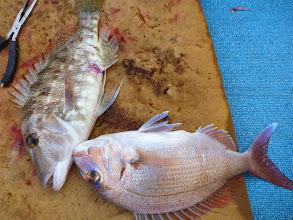 Photo: 真鯛とフエフキ!