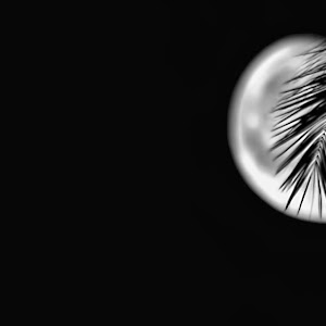 Moonleaf.jpg