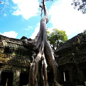 Ta Prohm Temple, Cambodia by Won Yee Ong - Nature Up Close Trees & Bushes
