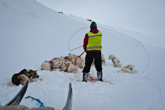 Photo: While untangling the lines the pack is detached from the sled, which means you have x amount of dogs, all able to pull 1.5 times their own body weight, at the end of your arm. You have to show whose in charge, and a whip is used to give a clue, but no mark.