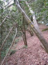 Photo: Site 1, zigzaguez entre les arbres