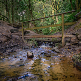 Wheres The Troll by Darrell Evans - Landscapes Forests ( crossing, stream, wood, waterfall, d600, stone, flow, vegetation, fern, creek, path, bank, nikon, rocks, water, flora, grass, green, forest, steps, woods, railings, trees, bridge, walk,  )