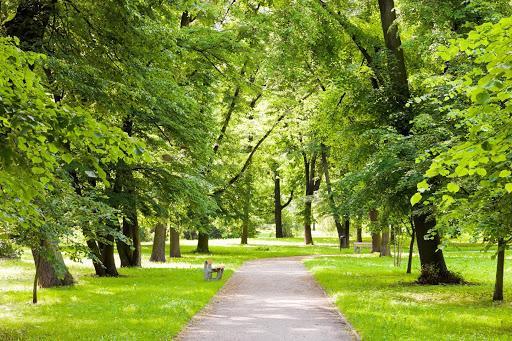 Ảnh có chứa cỏ, ngoài trời, cây, công viên  Mô tả được tạo tự động