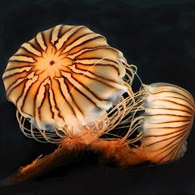 Jelly Fish by Linda Brooks - Uncategorized All Uncategorized (  )