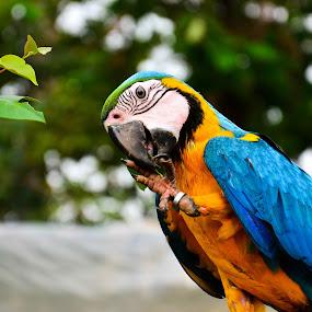 ....Colours by YSKAy ClickZ - Animals Birds