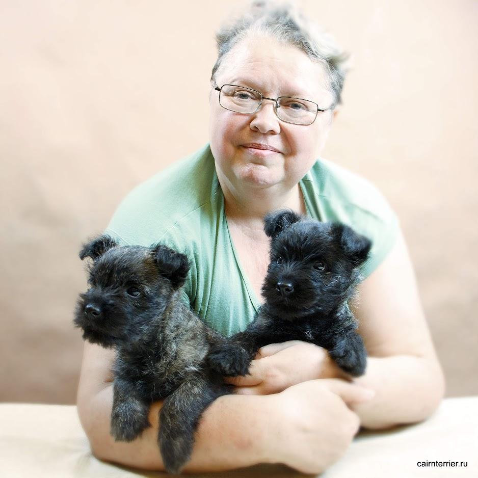 Фото щенков керн терьера из дома Еливс у владельца питомника на руках