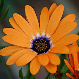 by Margie Troyer - Flowers Single Flower
