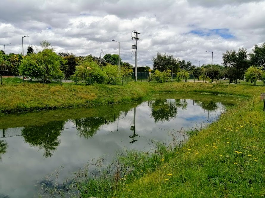 Humedal Mora verde 2