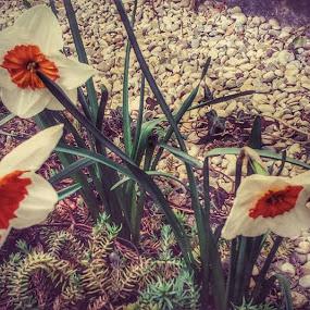 Beauties in small Garden by Nat Bolfan-Stosic - Uncategorized All Uncategorized ( home, backard, beauty, flowers, garden )