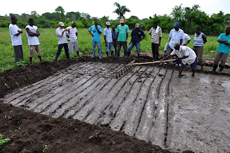 Photo: Day of transplanting - the self-made marker is used to prepare a grid pattern that will guide the transplanting; Ferrier, Haiti, June 2010 [Photo by Erika Styger]