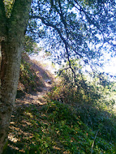 Photo: Under the oak looking back up the trail.
