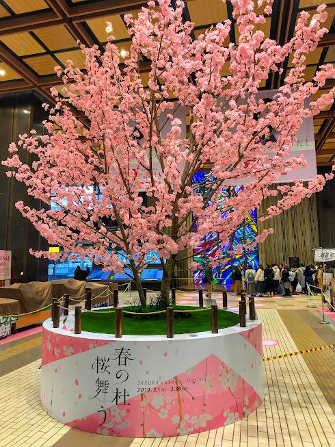 「春の杜桜舞う」ひと足先に、仙台駅は桜が満開です。