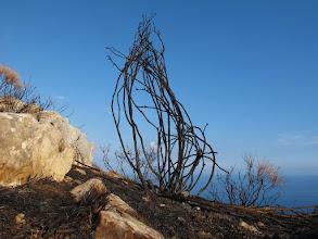 """Photo: scheletro di arbusto nei pressi della recinzione del """"radar"""""""