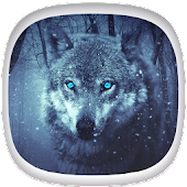 Wolf Wallpapers: Cool Animal Backgrounds Free