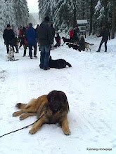 Photo: Wegas - 2.12.2012 - Spaziergang mit  Hundeverein