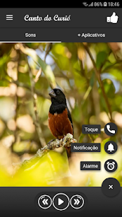 Download Canto do Curió For PC Windows and Mac apk screenshot 2