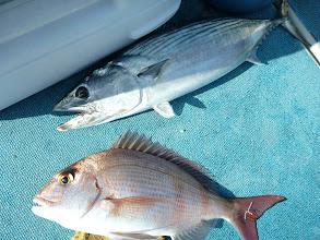 Photo: 船頭さん、ハガツオと真鯛。