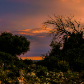 Life and death by Giuseppe Parisi - Digital Art Places ( siracusa, sunset, sicily, clouds, trees )