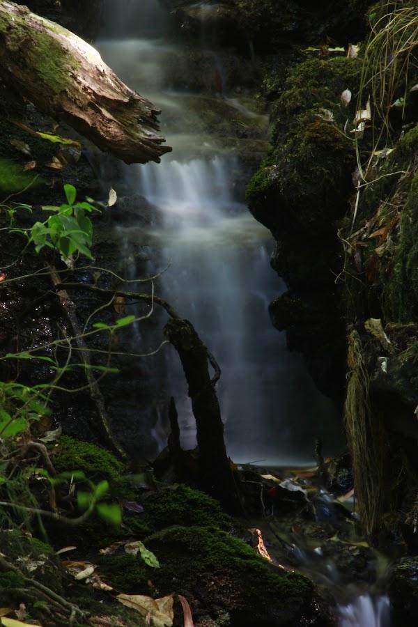 by Mike Ezernieks - Nature Up Close Water
